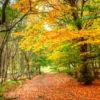 autumn day (bath & body works type) fragrance