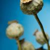 Golden Opium fragrance