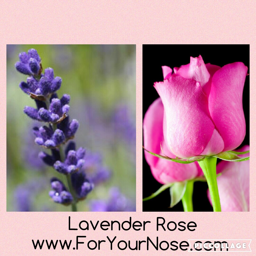 lavender rose fragrance