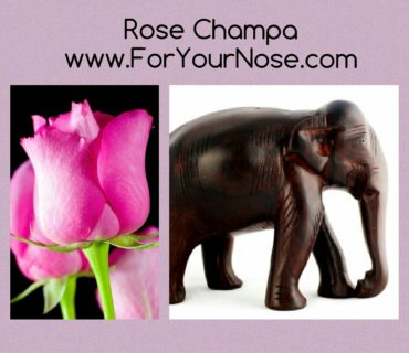 Rose Champa fragrance