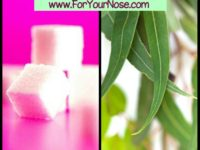 pink eucalyptus spearmint fragrance