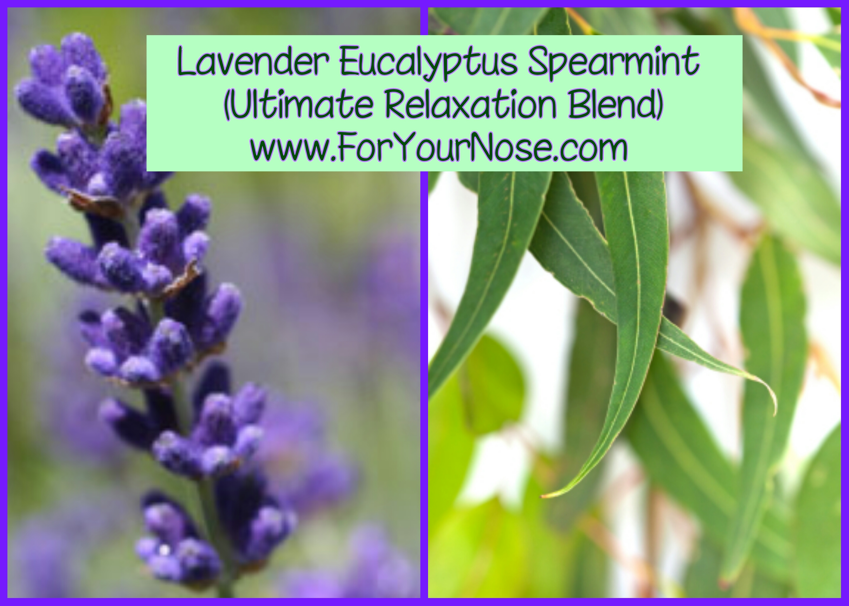 lavender eucalyptus spearmint fragrance